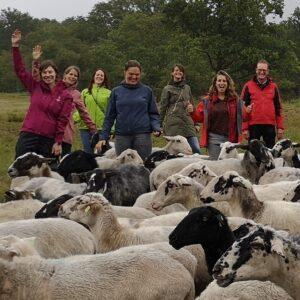 vrolijke teamfoto van teamuitje ggz met de schaapskudde tijdens de workshop schapendrijven in de duinen van het nationaal park zuid kennemerland