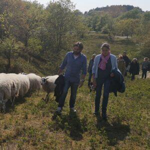 groep van school bestuur wandelt tijdens teamuitje met schaapskudde door het duingebied van het Nationaal Park Zuid Kennemerland, 2 personen wandelen voorop en zijn met elkaar in gesprek in een hele mooie groene omgeving