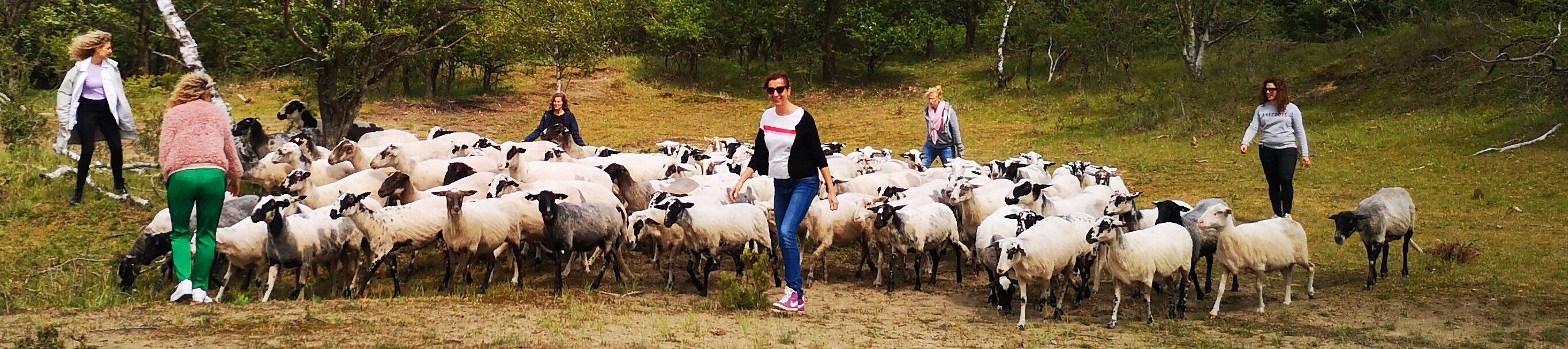 groep vrienden drijft de schaapskudde bijeen in het Nationaal Park Zuid Kennemerland in de workshop schapendrijven van Buitendag.nl als onderdeel van hun vrijgezellenfeest